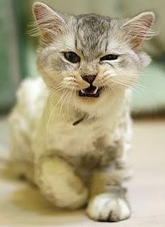 """""""Il gatto furioso"""" di Ludovico Arrosto – Canto Quarto"""