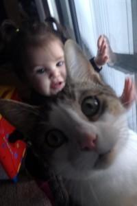 gatto bastardo 15