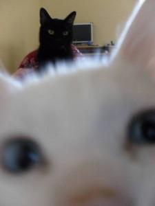 gatto bastardo 3
