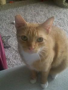 gatto bastardo 8
