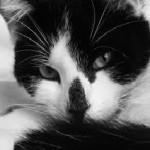 Le 7 cose da fare per rendere felice un gatto!