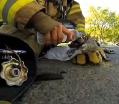 Pompiere salva e rianima gattino