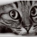 I 7 vantaggi di avere un gatto