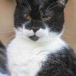 Ha 27 anni il gatto più vecchio del mondo