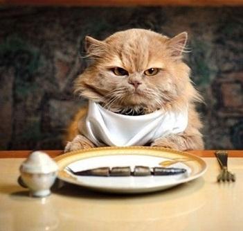 Le 7 cose da non far MAI mangiare ad un gatto