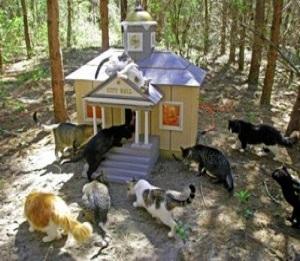 È nata la prima città dei gatti