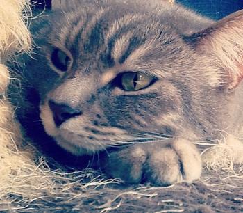 5 cose che odio di te. Miti (da sfatare) sui gatti!