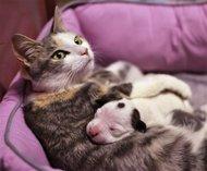 Cagnolino rifiutato dalla madre. Lo adotta un gatto!