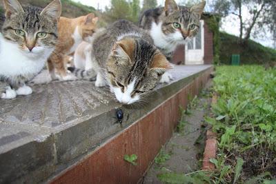 Insetti in casa ci pensa il gatto for Cosa mangia il gatto