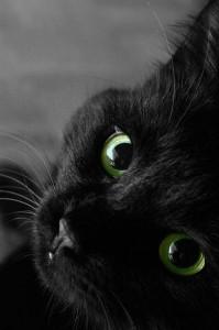 gatti neri pellicce