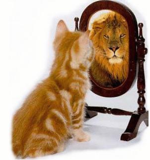 Daisy, la gatta che si credeva un leone