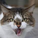 Aggredita dal suo gatto, finisce in ospedale!