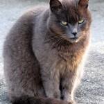 Altro che cani. Ecco a voi i gatti da guardia!