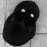 Ecco cosa succede quando i gatti sentono il loro nome