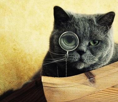 Gatti abilissimi, ovvero: ecco come ti risolvo un problema