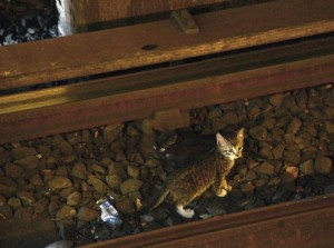 gattini-fermano-la-metropolitana-di-new-york-3-770x573