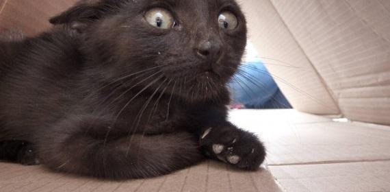 gatto fissa vuoto