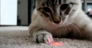gatto laser