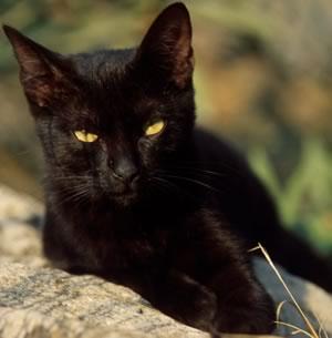 Avete perso il gatto ecco come cercarlo e farlo tornare - Gatto solo in casa per 15 giorni ...