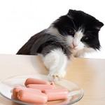 Gatto ruba cibo. Scoperto finge di dormire [VIDEO DIVERTENTE]