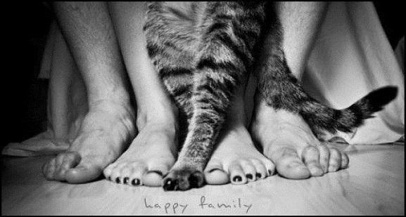 i gatti danno la felicità
