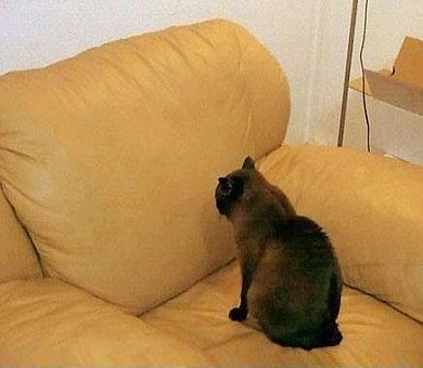Ecco perchè i gatti miagolano sempre e fissano il vuoto