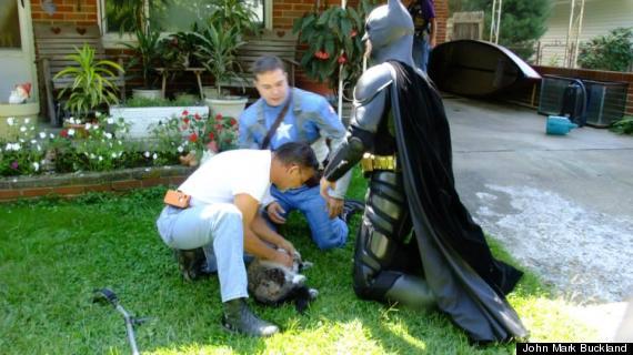 salvataggio gatto batman capitan america