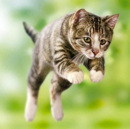 Quello che non sapevi sui gatti!