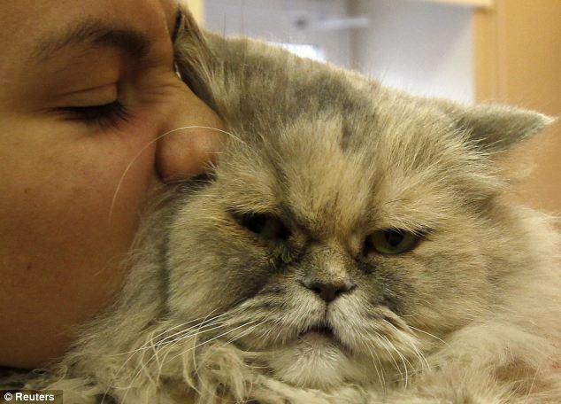 Le coccole stressano i gatti!
