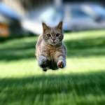 I gatti hanno 7 o 9 vite? Ecco svelato il mistero!