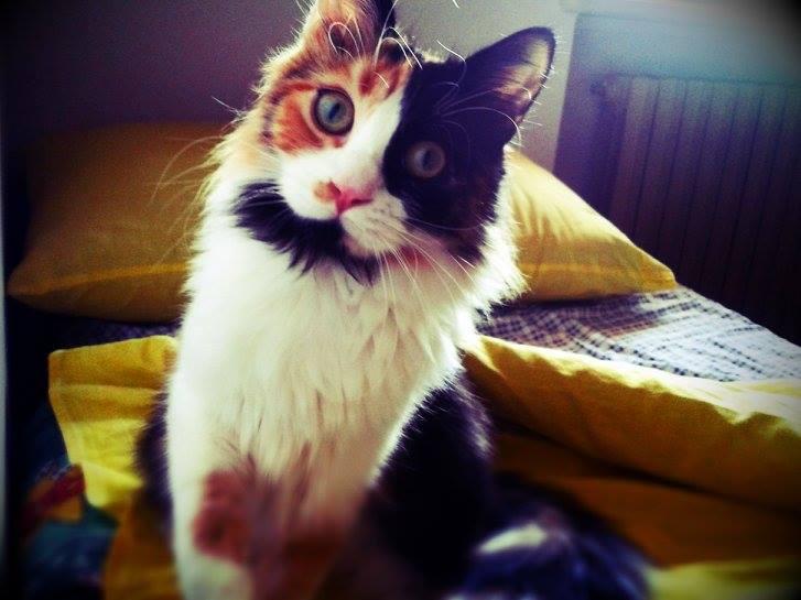 brioche_mister gatto 2013