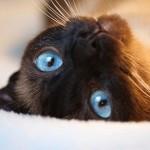 Ecco cosa vedono i gatti!