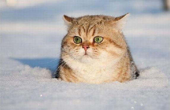 gatto neve freddo