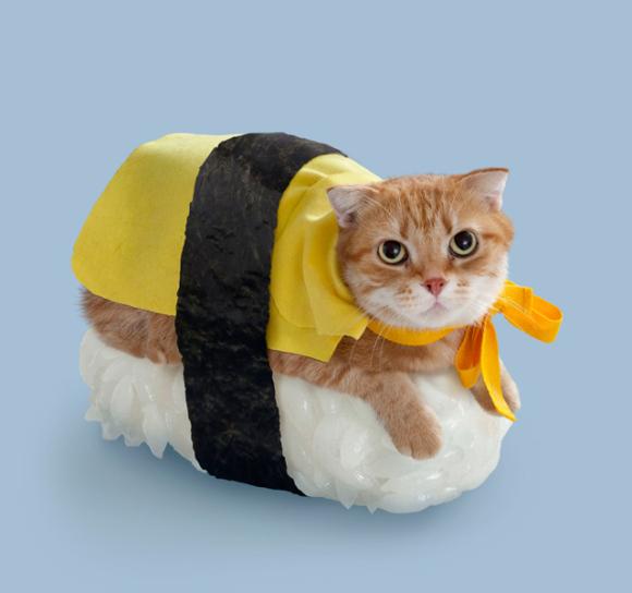 nekosushi_cat sushi gatto 1