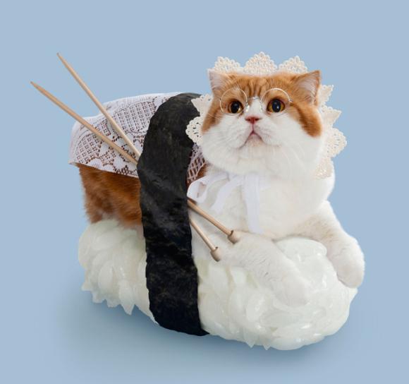 nekozushi_cat sushi gatto 11
