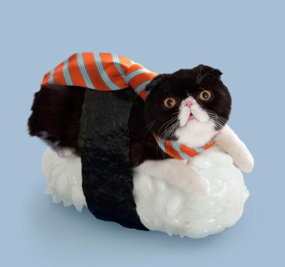 nekozushi_cat sushi gatto 3