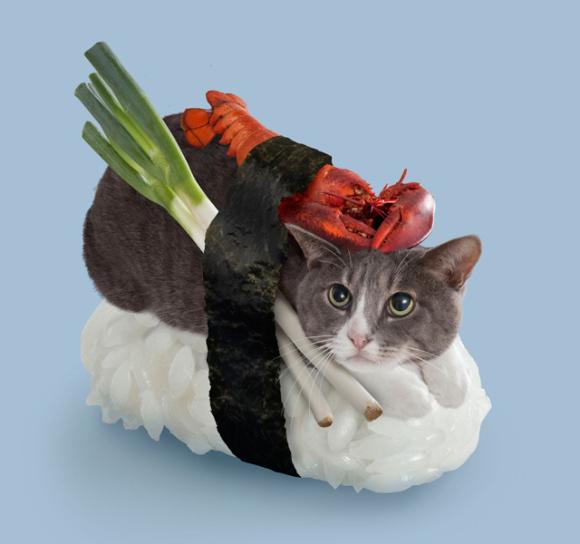 nekozushi_cat sushi gatto 4
