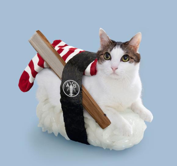 nekozushi_cat sushi gatto 5