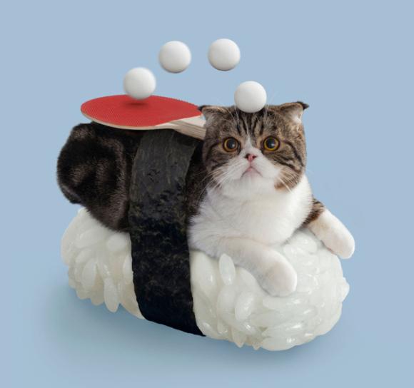 nekozushi_cat sushi gatto 6