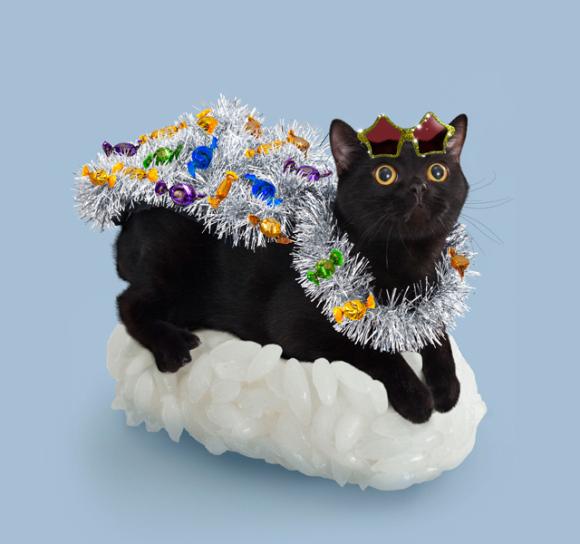 nekozushi_cat sushi gatto 7