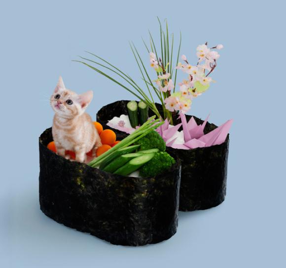 nekozushi_cat sushi gatto 8