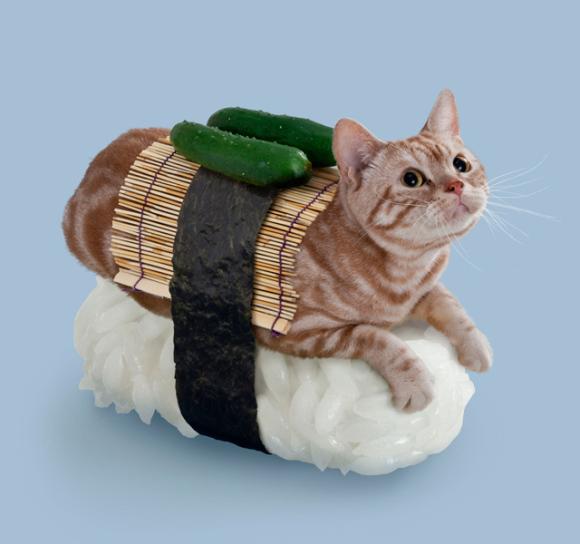 nekozushi_cat sushi gatto 9