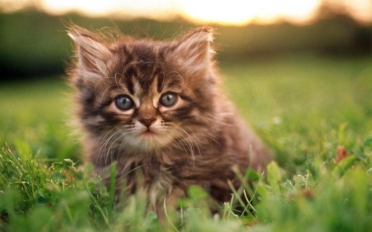 come farsi adottare da un gatto