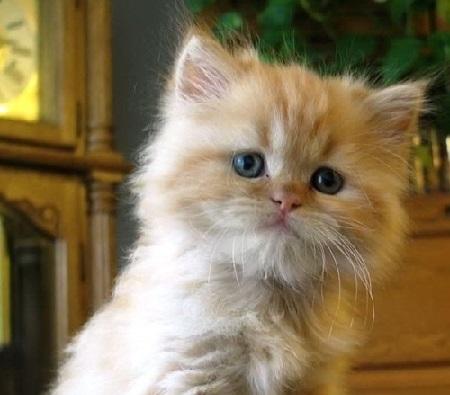 Tanti gatti come non li avete mai visti!