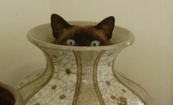 gatti paura botti capodanno