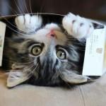 Perchè i gatti amano la scatole? [VIDEO DIVERTENTE]