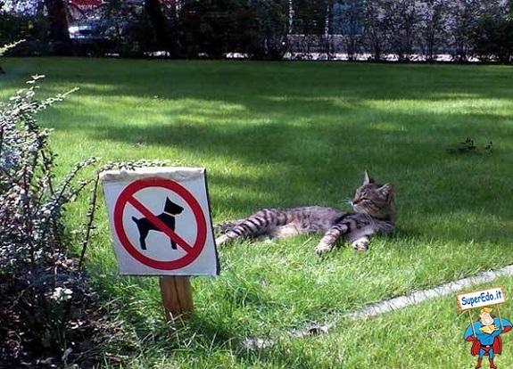 gatto bullo