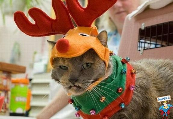 gatto carnevale