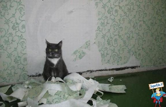 gatto carta igienica