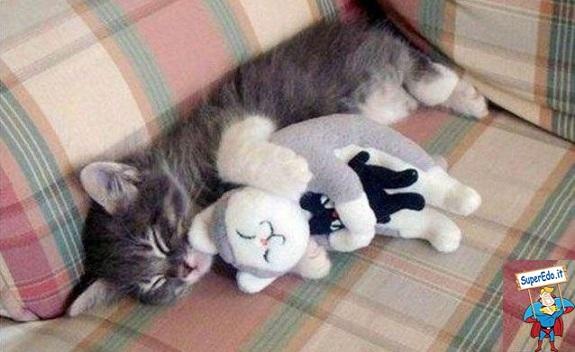 gatto peluche